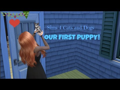Sims 4   Cats and Dogs!!! Episode: 1