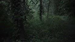 Lighting bugs काजवे राणादाने पाठक बाईंना दाखवले त्यापेक्षा भारी!