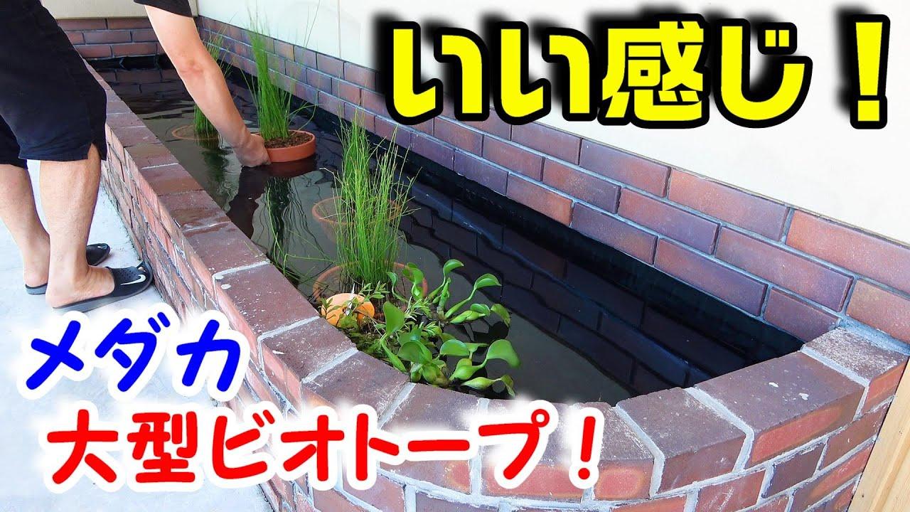 【メダカ】水漏れしたビオトープ・・・復活!!! 防水シートに穴をあけた犯人確保!