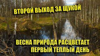 Рыбалка на спиннинг ловлю щуку в лесу