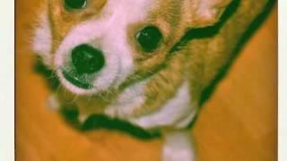 I Cani - I Pariolini di 18 anni