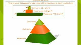 Ecological pyramids thumbnail