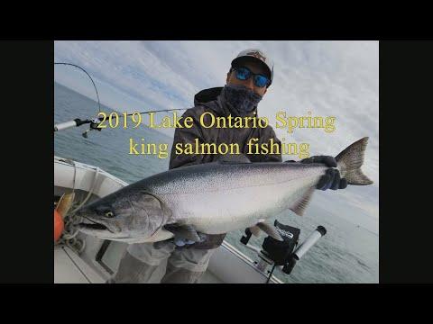 Spring Ontario Lake King Salmon Fishing