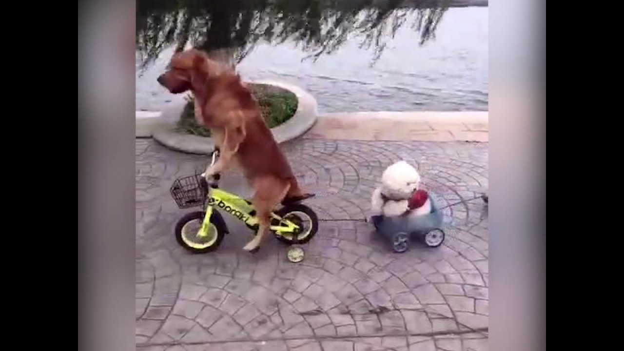 Roller skates for dogs - A Dog S Riding Bicycle It S Real