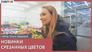 7цветов: свежая поставка срезанных цветов / Обзор Ольги Шаровой
