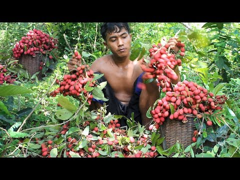 Primitive Technology: Find Wild Fruits