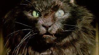 """Ларс и Эрни привели в дом бешеного кота - """"Мышиная охота"""" отрывок из фильма"""