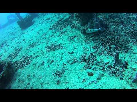 C-56 Puerto Morelos Shipwreck Dive