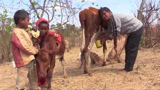 Agroécologie et animaux de la ferme