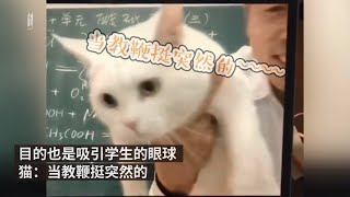 Chemistry teacher in China goes viral for teaching with cat online