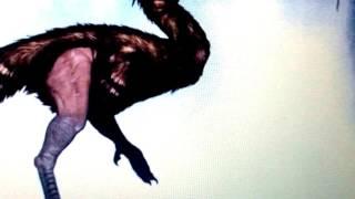 Гилеорнис-большая лесная птица