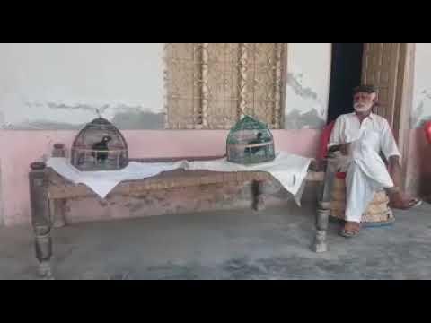 Full Download] Teetar Voice Sindhi Teetar Kala Teetar Ki