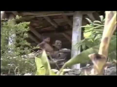 Bishop Belo Report - East Timor