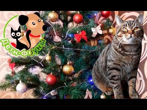 Кот и елка. Новогодние опасности для животных