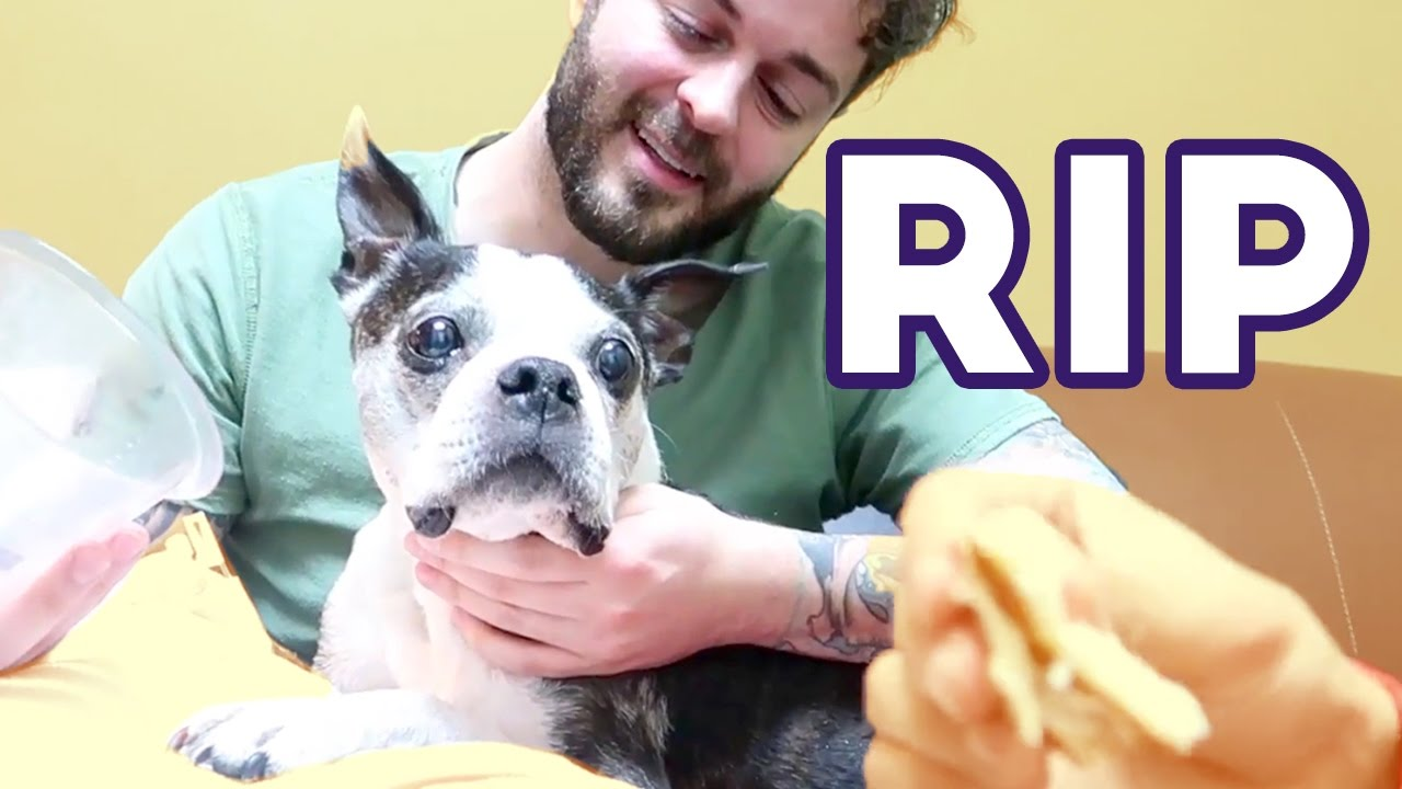 Saying Goodbye To My Best Friend A Tribute To Buster