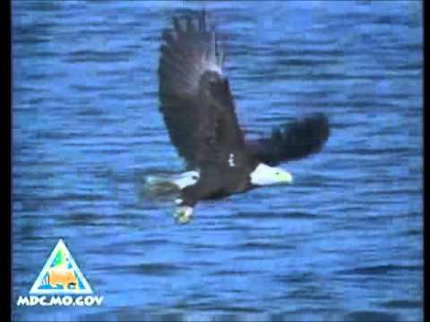 Steve Miller Band -Fly like an eagle