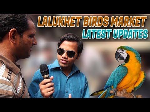Lalukhet Birds Market Latest UPdate 24-9-2017 In (Urdu/Hindi)