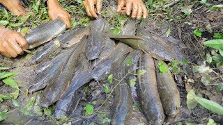 Best Hand Fishing -  Two Mans Catching Giant Big Fish By Mud In The Dry Season
