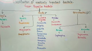 Classification of medically important bacteria based on gram stain.