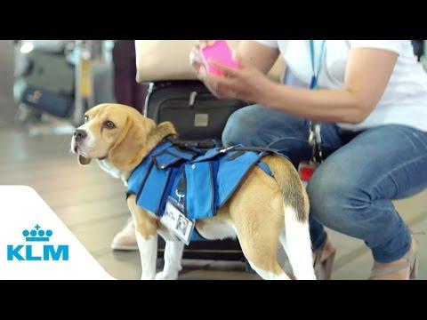 KLM Lost & Found service