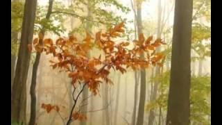 Песнь покоя (music by Sri Chinmoy)