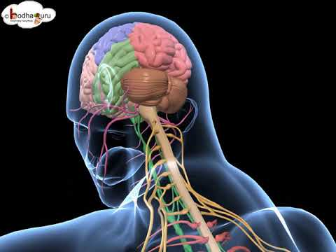 3d medical animation videos free download