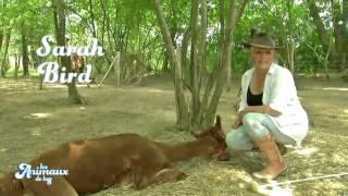 Ferme insolite et sports équestres dans les Hautes Pyrénées   Les animaux de la 8 D8 2013 10 13 12 0