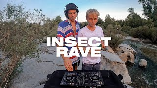 insect rave