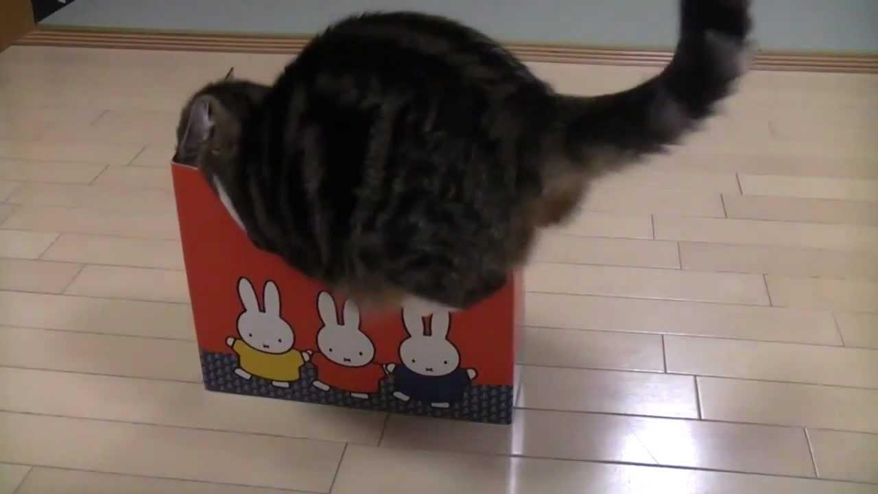 Katze Kiste