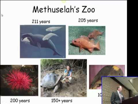 From Mice to Methuselah: What We Can Learn from the Comparative Biology of Aging