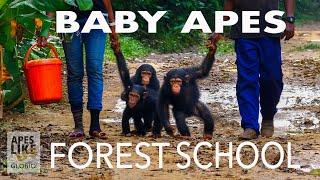 BABY APE FOREST SCHOOL
