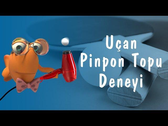 Profesör Balık ile Deneyler: Uçan Pinpon Topu Deneyi