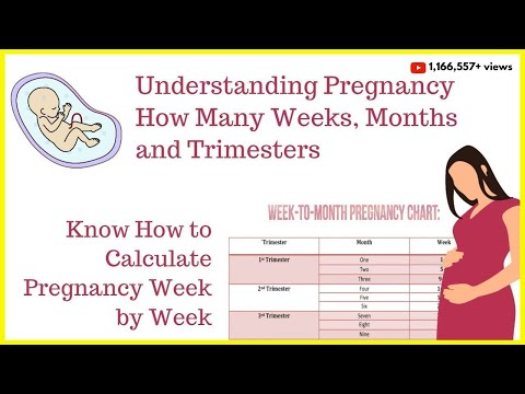 How To Calculate Your Pregnancy By Weeks, Months & Trimesters | Weeks Into Months |Your Youtube Mom