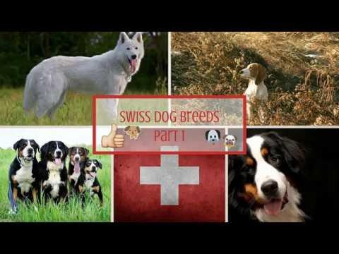 Swiss Dog Breeds Part 1