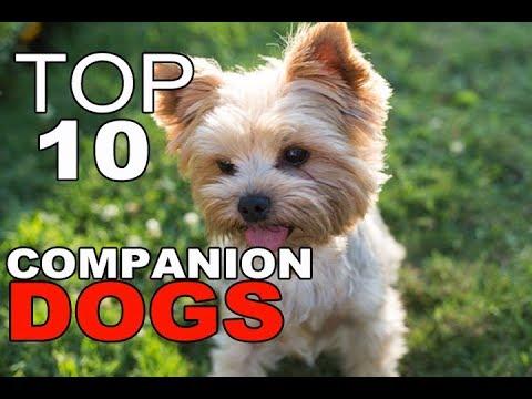 Top 10 Best Companion Dog Breeds
