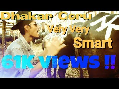 Dhakar Goru Very Very SMART | Ultra GrupzZ | Eid Song | 2016