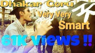 Dhakar Goru Very Very SMART | Bhallagse LTD | Eid Song | 2016