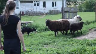 Nery, Herding 02.06.18