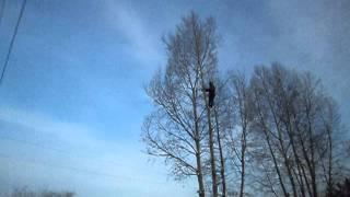 красноярск удаление дерева высотные работы 215-24-11(, 2012-02-07T05:11:33.000Z)