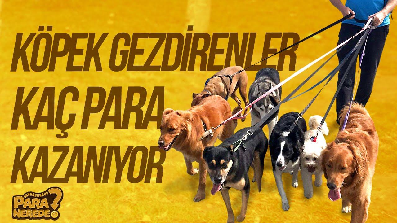 Köpek Gezdirenler Ne Kadar Kazanıyor?