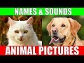 ANIMAL PICTURES for Babies - With Sounds and Names!