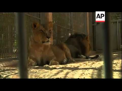 Animals traumatised after weeks of fighting near Tripoli''s zoo