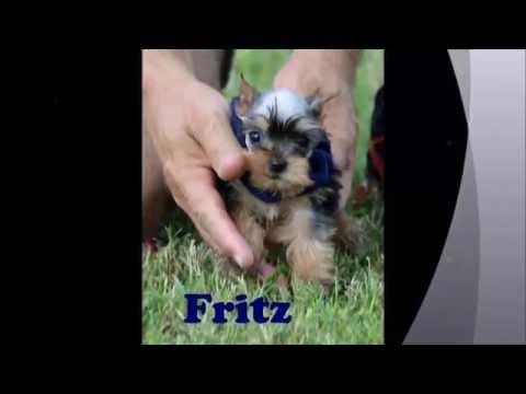 fritz heidi gretel 7 31 16