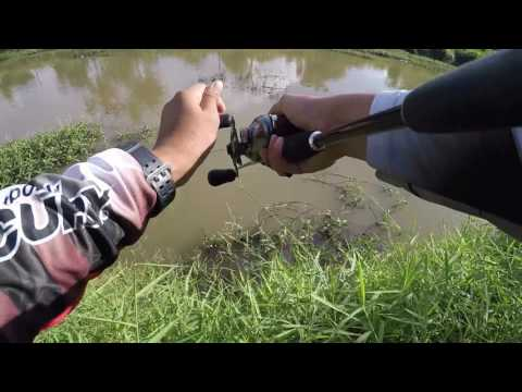 Casting Belida ( Featherback Fish ) Sg  Korok , Jitra , Kedah with Kie Rocketmail