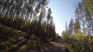 Kajaaninrossit 13.9.2015 Bikejoring/koirapyöräily 3,75km