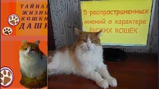 5 РАСПРОСТРАНЕННЫХ МНЕНИЙ О ХАРАКТЕРЕ РЫЖИХ КОШЕК И КОТОВ(на примере кошки Даши)