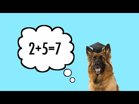 TOP TEN SMARTEST DOG BREEDS  TheAnimalGalaxy TAG