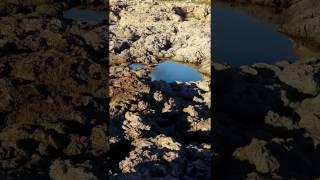 Mallorca Nature 6
