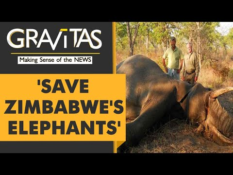 Gravitas: 500 Elephants put on sale for hunting