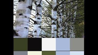 видео Зеленый Цвет в Интерьере Квартиры, Его Оттенки и Стильные Сочетания с Другими Цветами